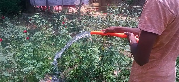irrigating-roses